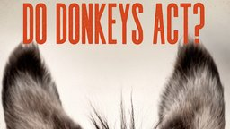 Do Donkeys Act? - The Mystery and Intrigue of the Donkey